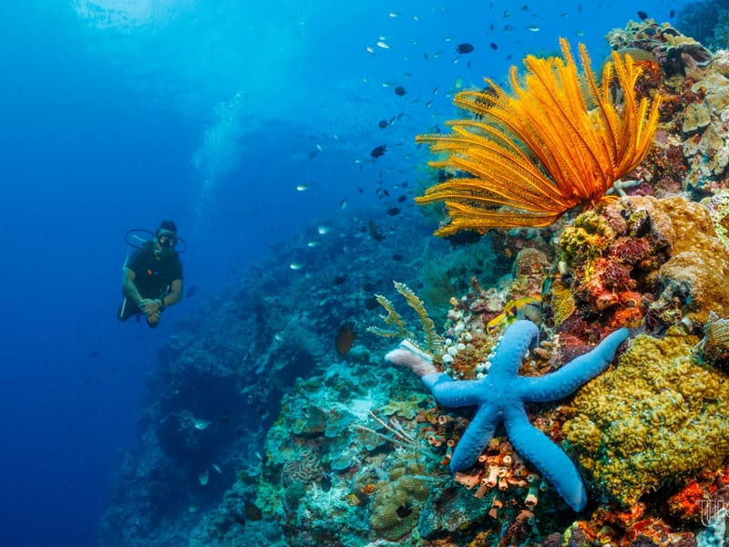 A starfish on a reef with diver