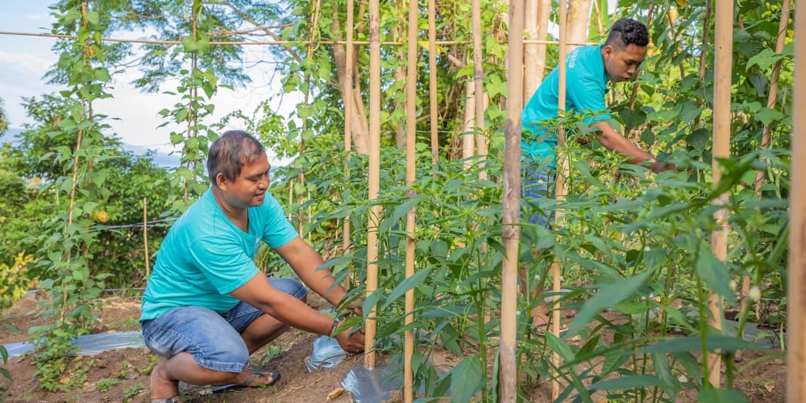 Our organic veggie garden at Manado