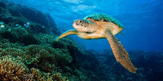 Diving in North Sulawesi is something truly special